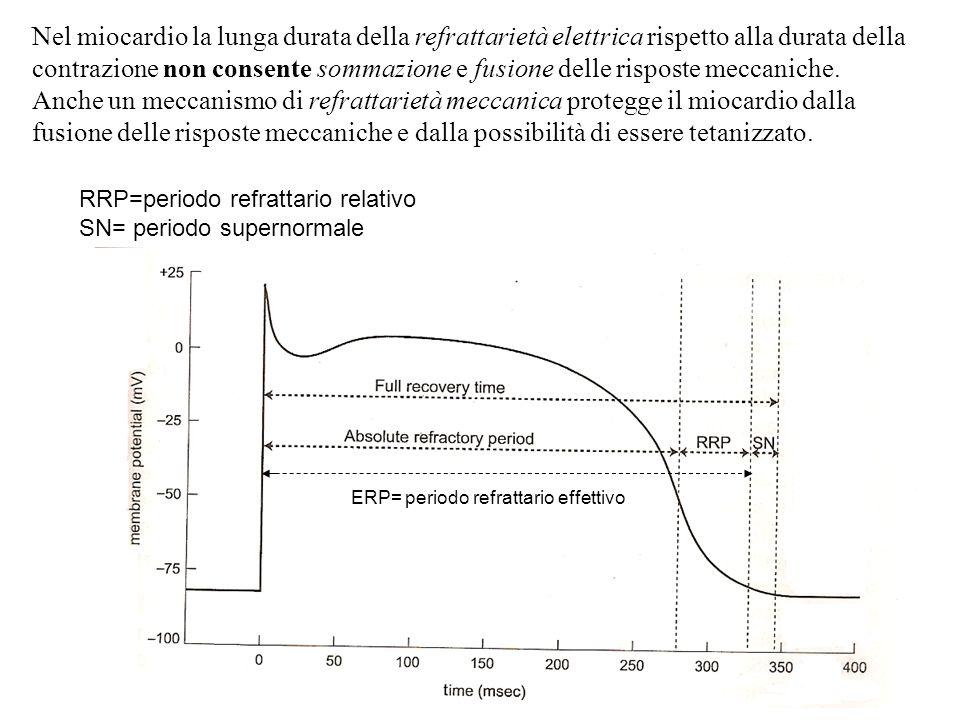 Nel miocardio la lunga durata della refrattarietà elettrica rispetto alla durata della contrazione non consente sommazione e fusione delle risposte meccaniche.