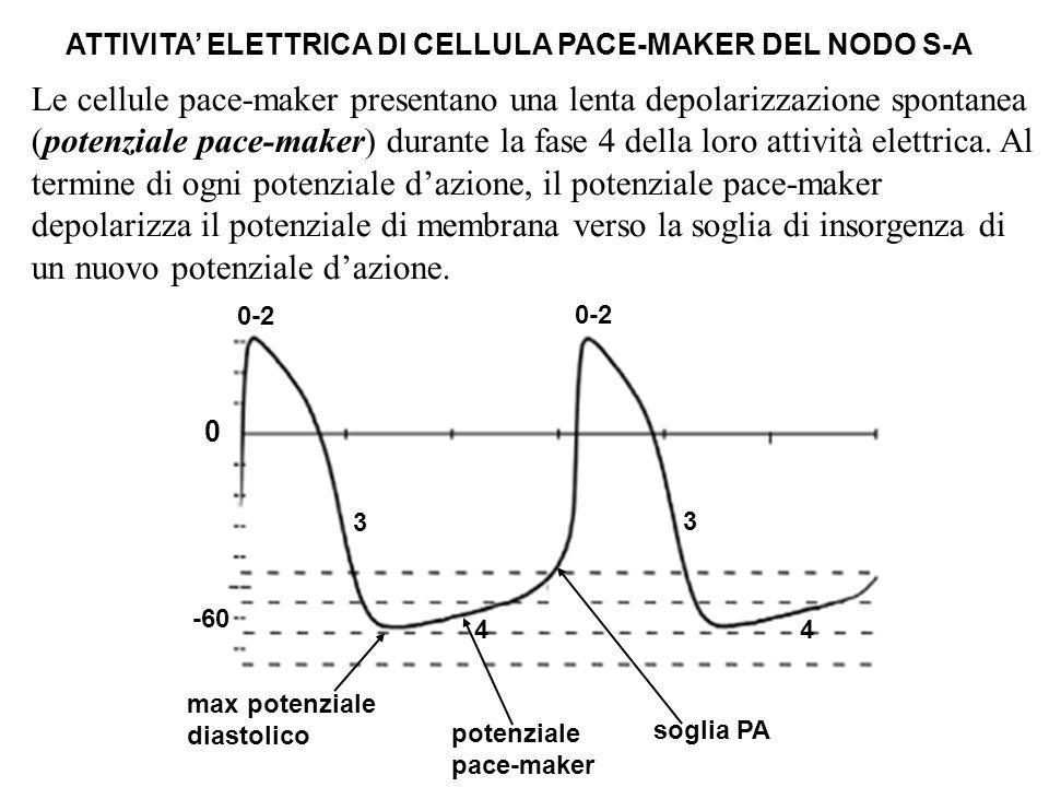 ATTIVITA' ELETTRICA DI CELLULA PACE-MAKER DEL NODO S-A