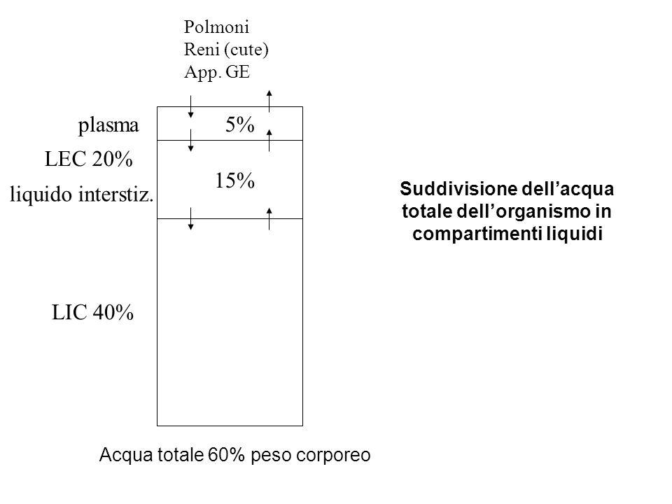 Suddivisione dell'acqua totale dell'organismo in compartimenti liquidi