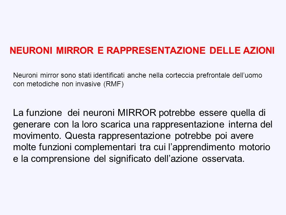 NEURONI MIRROR E RAPPRESENTAZIONE DELLE AZIONI