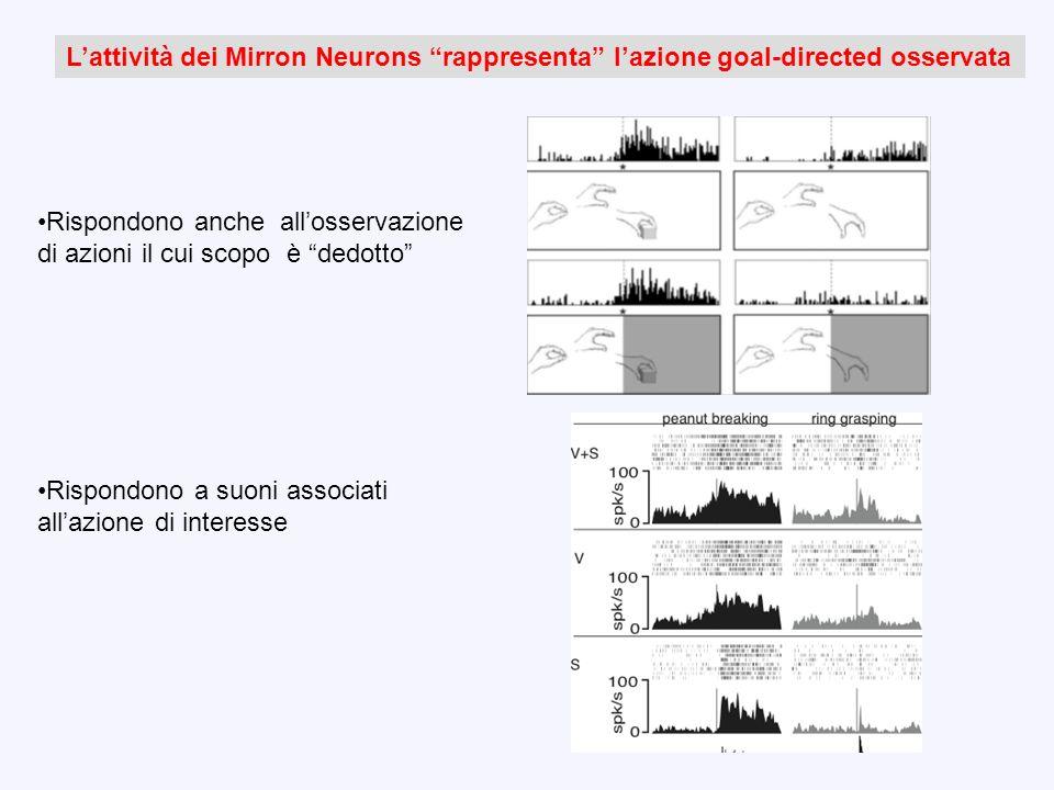 L'attività dei Mirron Neurons rappresenta l'azione goal-directed osservata
