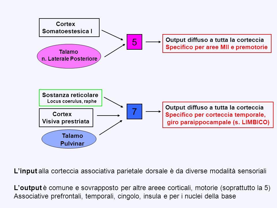 5 Cortex. Somatoestesica I. Talamo. n. Laterale Posteriore. Output diffuso a tutta la corteccia.
