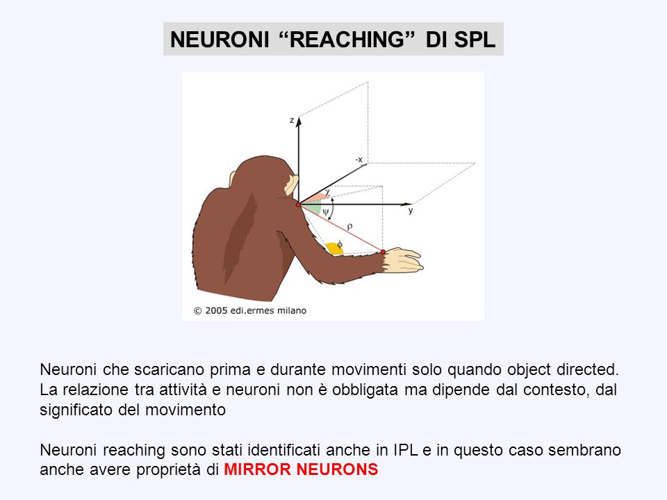 NEURONI REACHING DI SPL