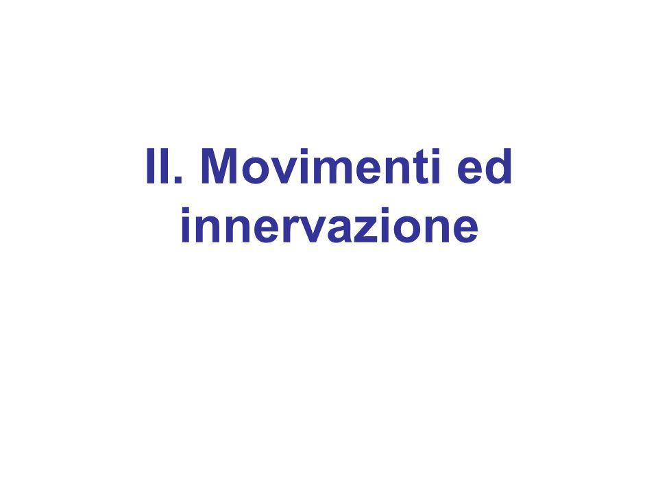 II. Movimenti ed innervazione