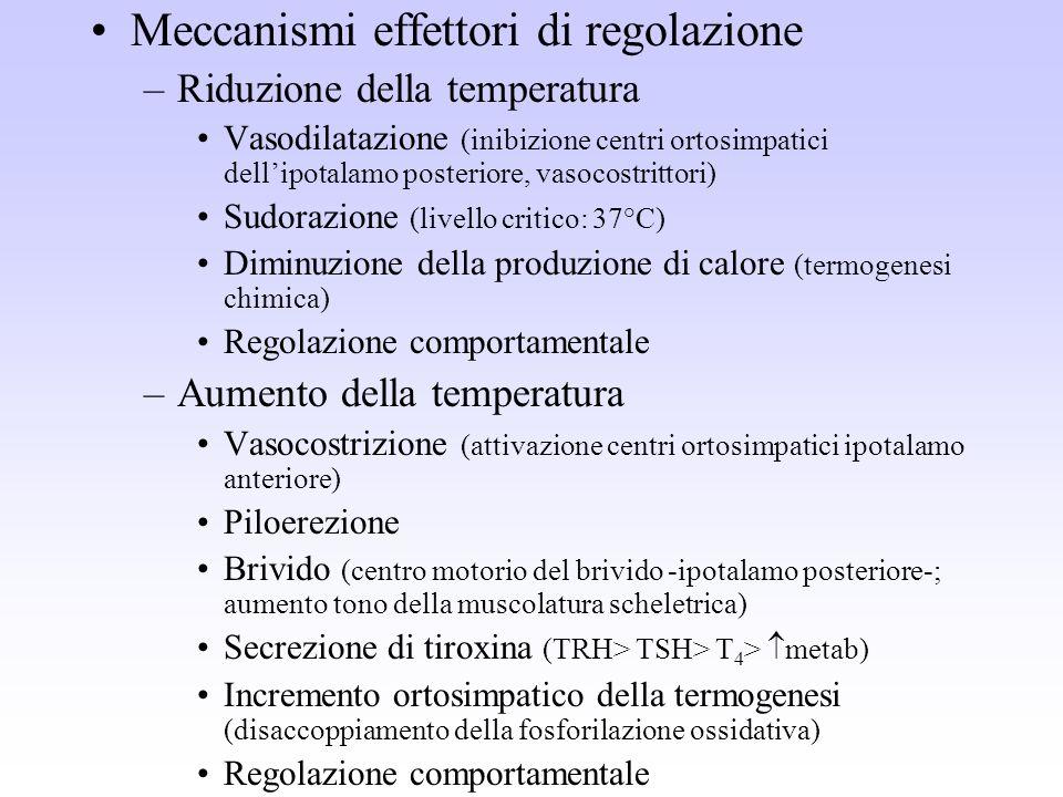 Meccanismi effettori di regolazione