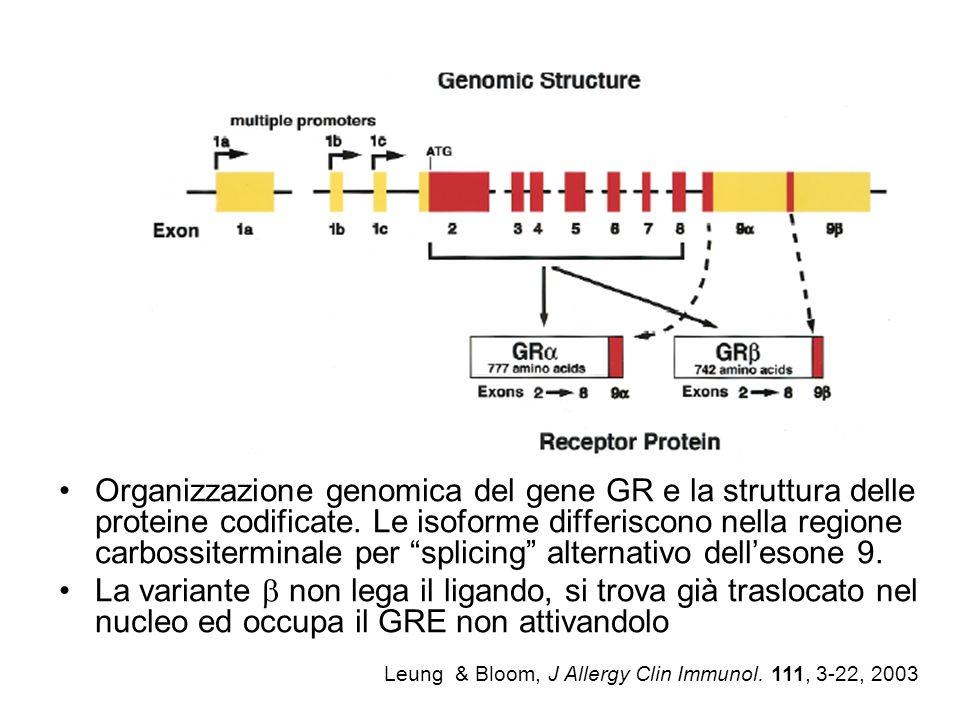Organizzazione genomica del gene GR e la struttura delle proteine codificate. Le isoforme differiscono nella regione carbossiterminale per splicing alternativo dell'esone 9.