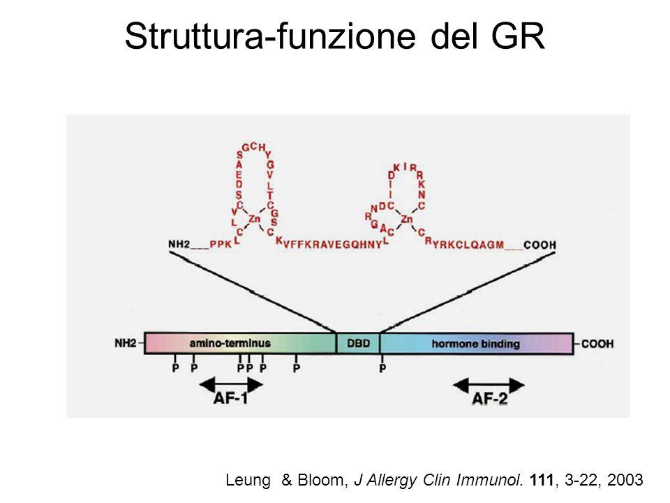 Struttura-funzione del GR