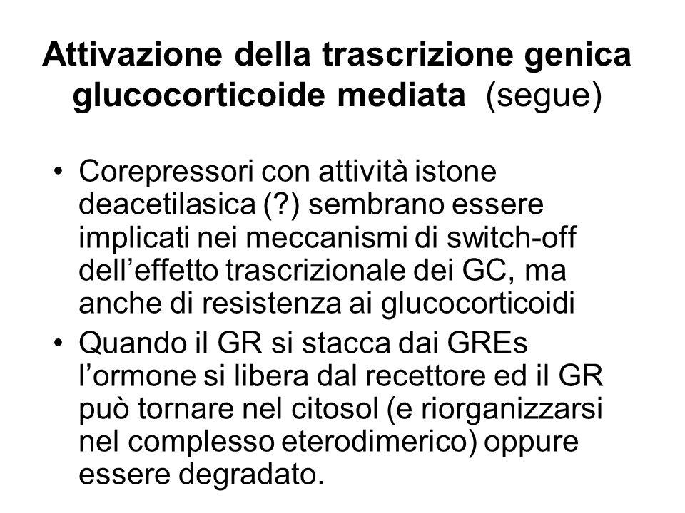 Attivazione della trascrizione genica glucocorticoide mediata (segue)
