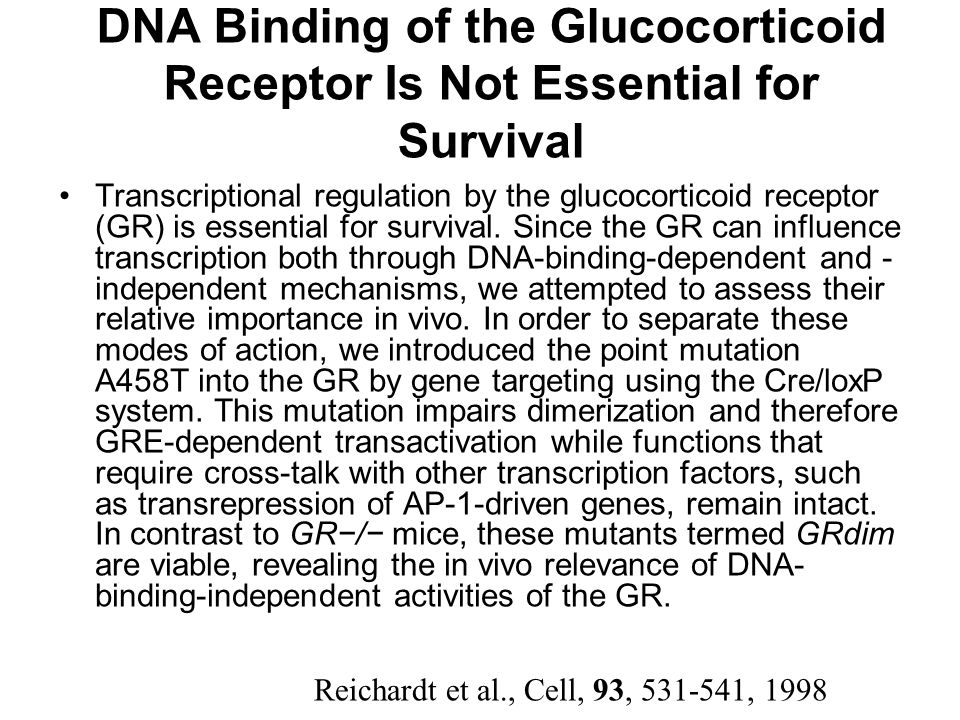 DNA Binding of the Glucocorticoid Receptor Is Not Essential for Survival
