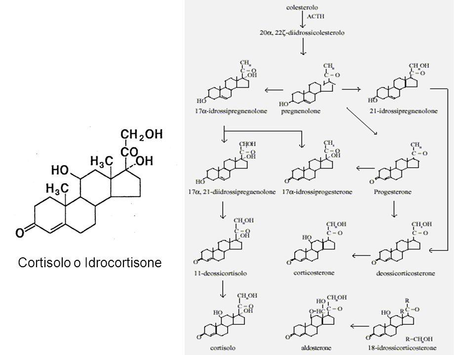 Cortisolo o Idrocortisone