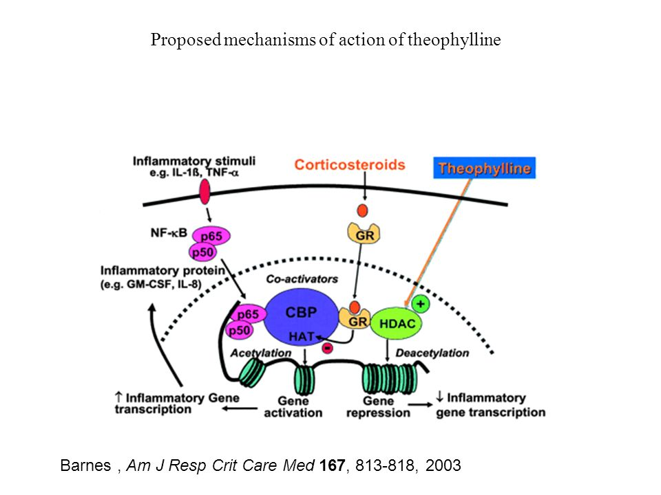 Proposed mechanisms of action of theophylline