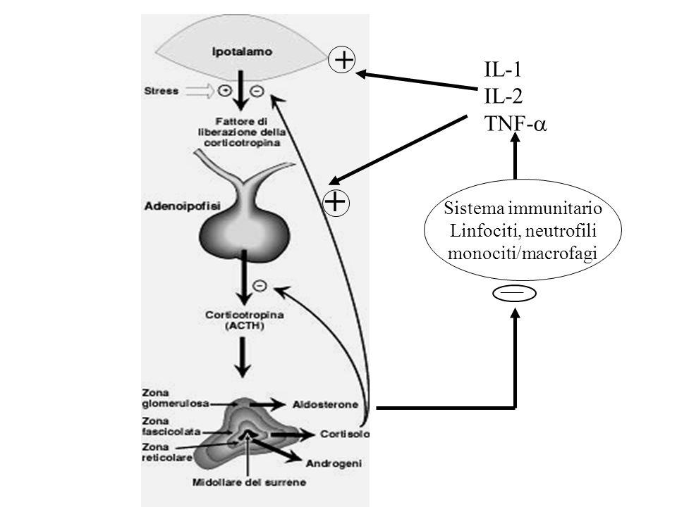 + IL-1 IL-2 TNF-a + ___ Sistema immunitario Linfociti, neutrofili