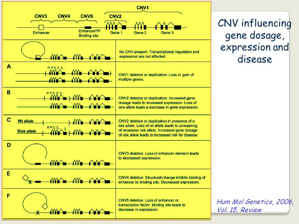 CNV influencing gene dosage, expression and disease