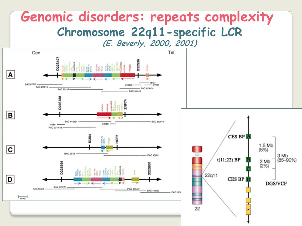 Genomic disorders: repeats complexity Chromosome 22q11-specific LCR