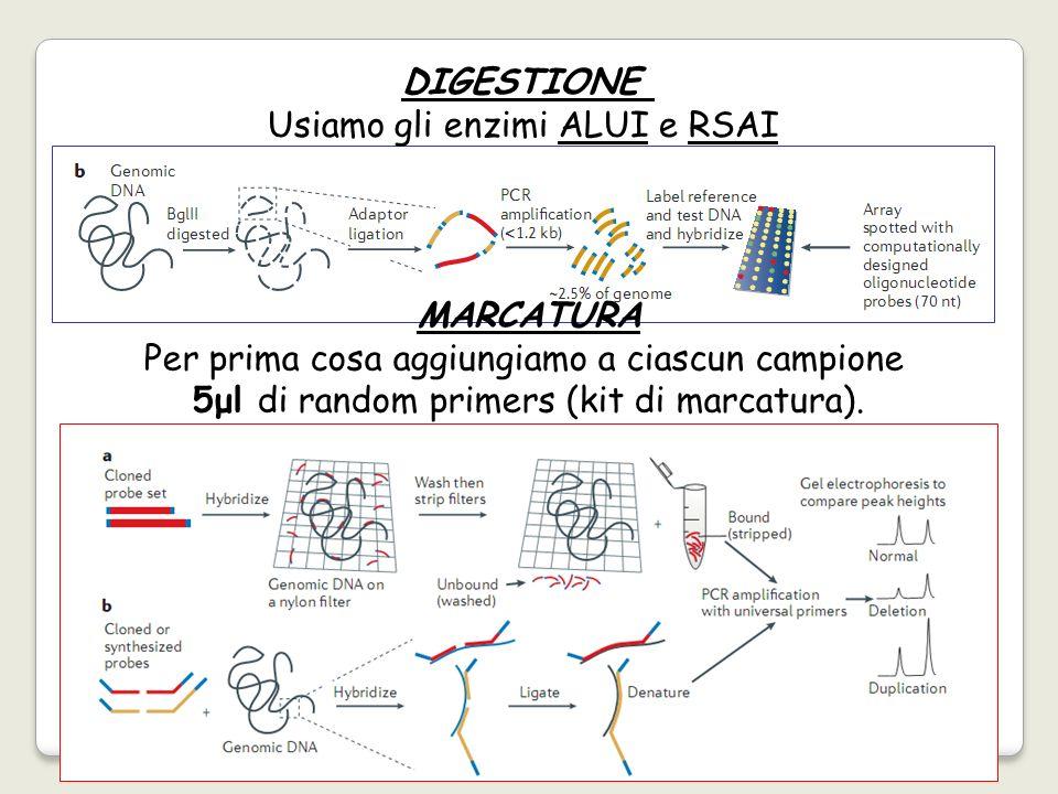 Usiamo gli enzimi ALUI e RSAI