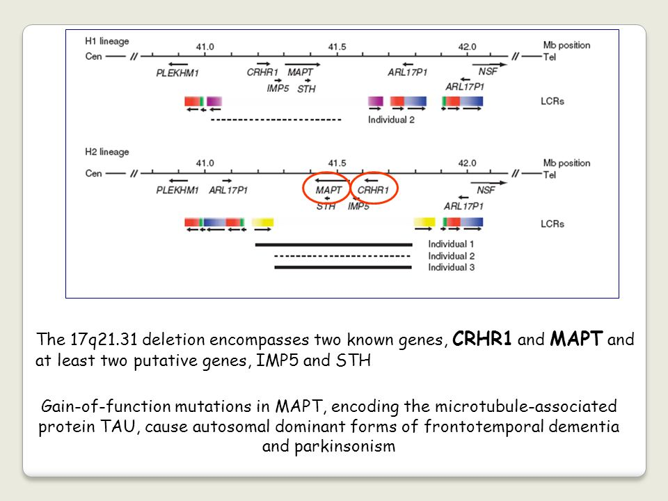 The 17q21.31 deletion encompasses two known genes, CRHR1 and MAPT and at least two putative genes, IMP5 and STH