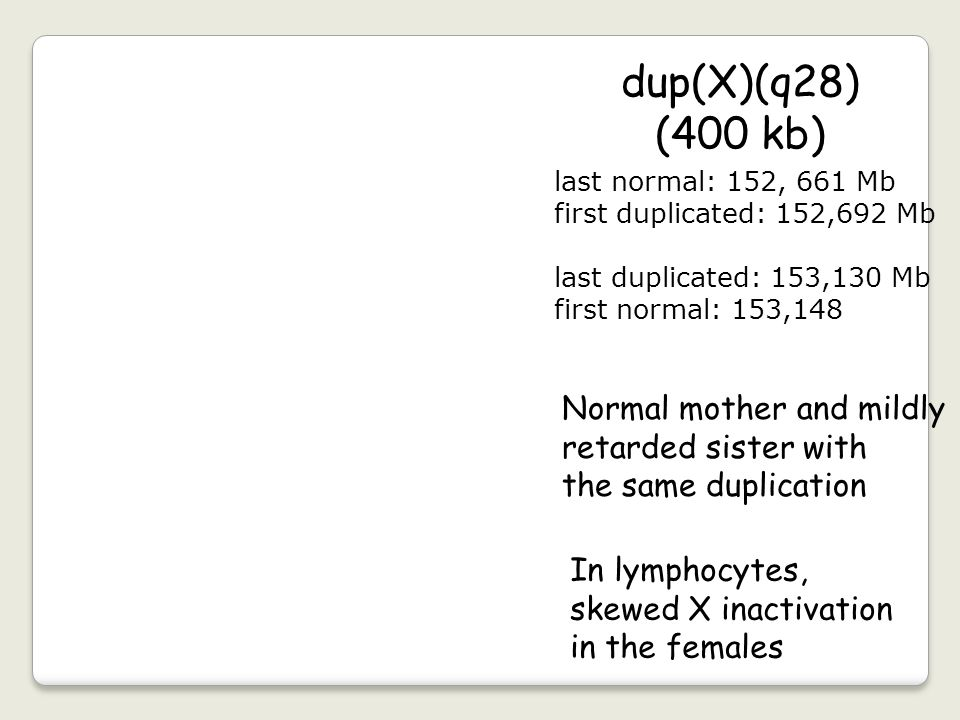 dup(X)(q28) (400 kb) Normal mother and mildly retarded sister with
