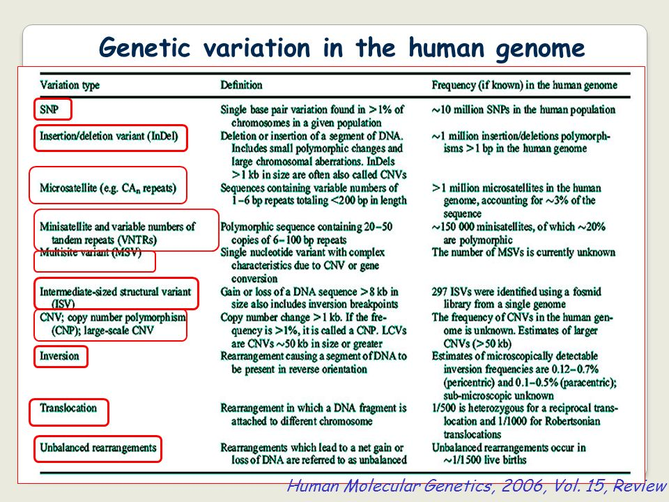 Genetic variation in the human genome