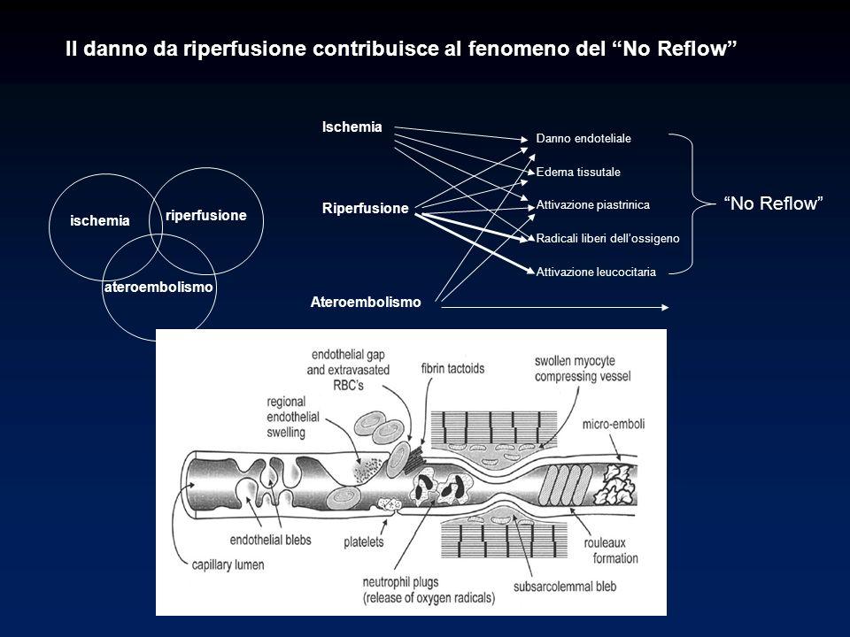 Il danno da riperfusione contribuisce al fenomeno del No Reflow