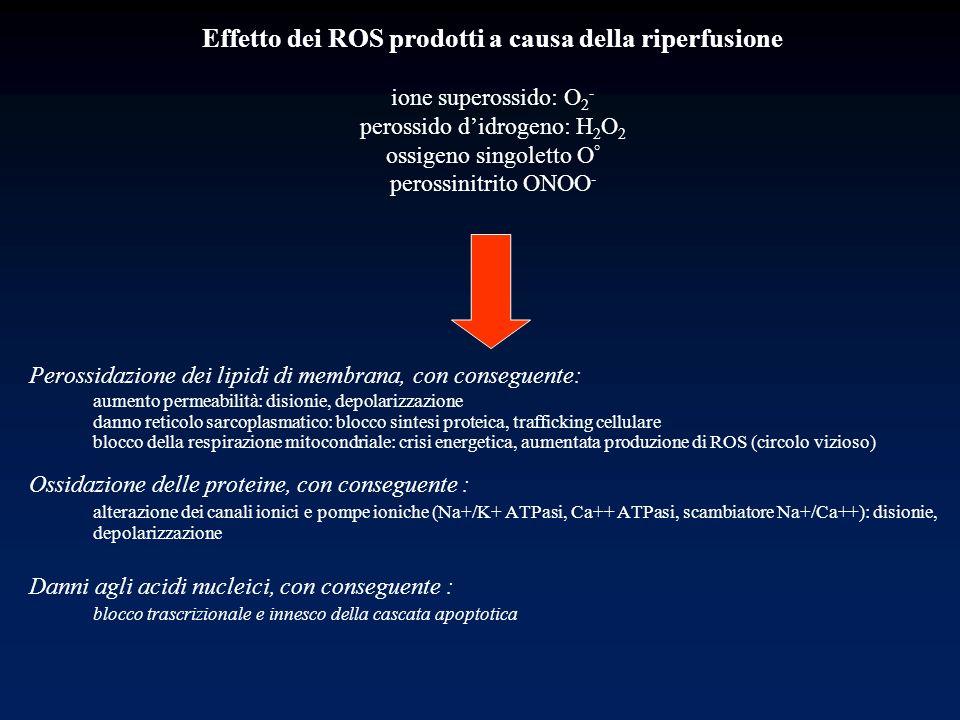 Effetto dei ROS prodotti a causa della riperfusione ione superossido: O2- perossido d'idrogeno: H2O2 ossigeno singoletto O° perossinitrito ONOO-