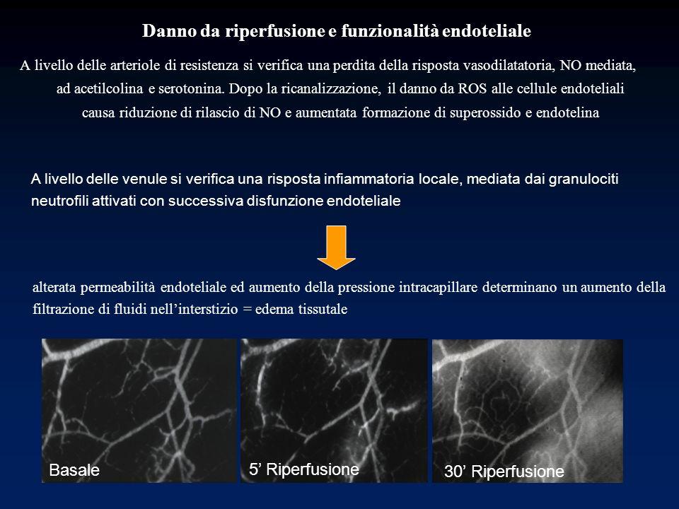 Danno da riperfusione e funzionalità endoteliale