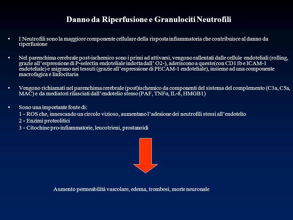 Danno da Riperfusione e Granulociti Neutrofili