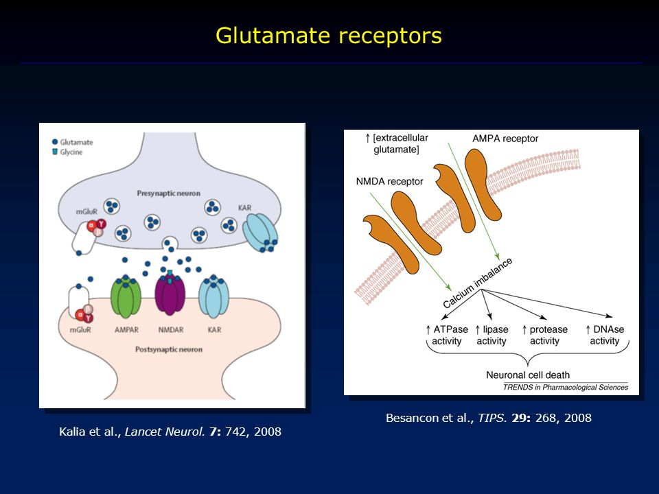 Glutamate receptors Besancon et al., TIPS. 29: 268, 2008