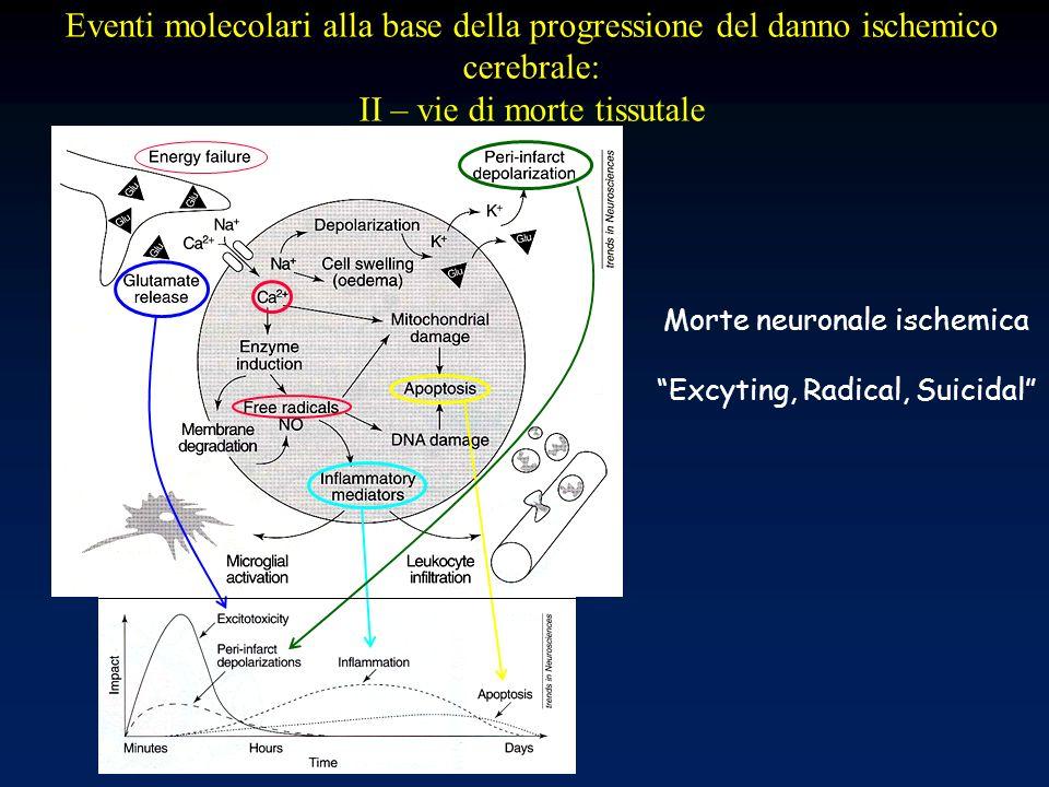 Eventi molecolari alla base della progressione del danno ischemico cerebrale: II – vie di morte tissutale