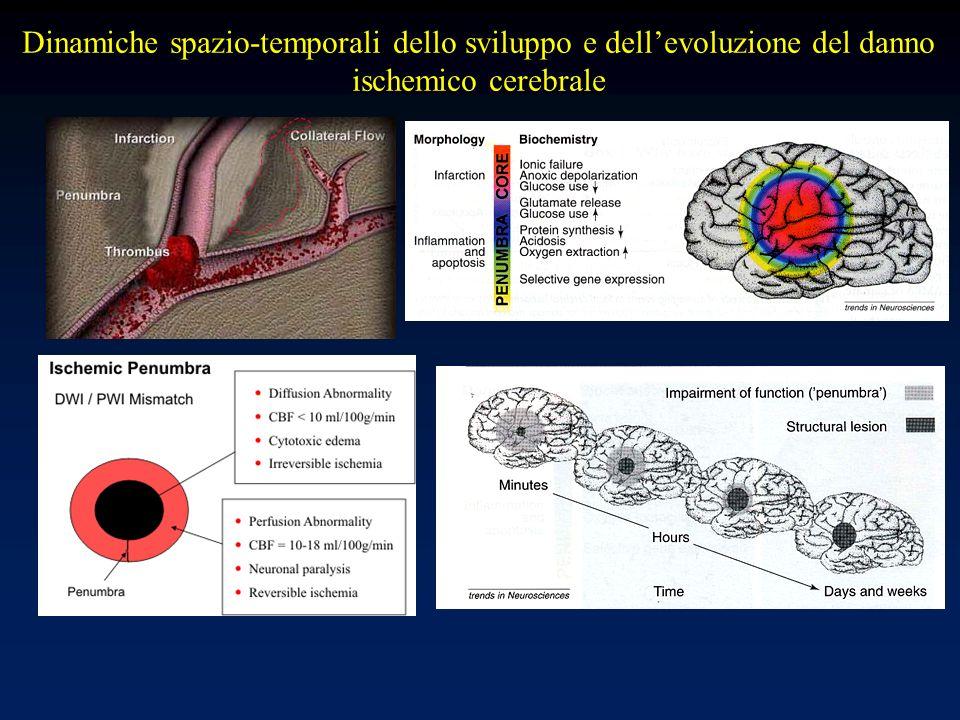 Dinamiche spazio-temporali dello sviluppo e dell'evoluzione del danno ischemico cerebrale