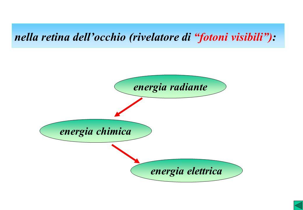 nella retina dell'occhio (rivelatore di fotoni visibili ):
