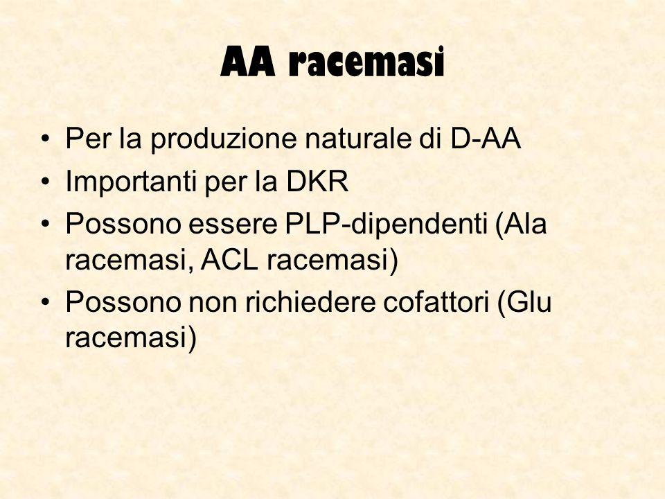 AA racemasi Per la produzione naturale di D-AA Importanti per la DKR