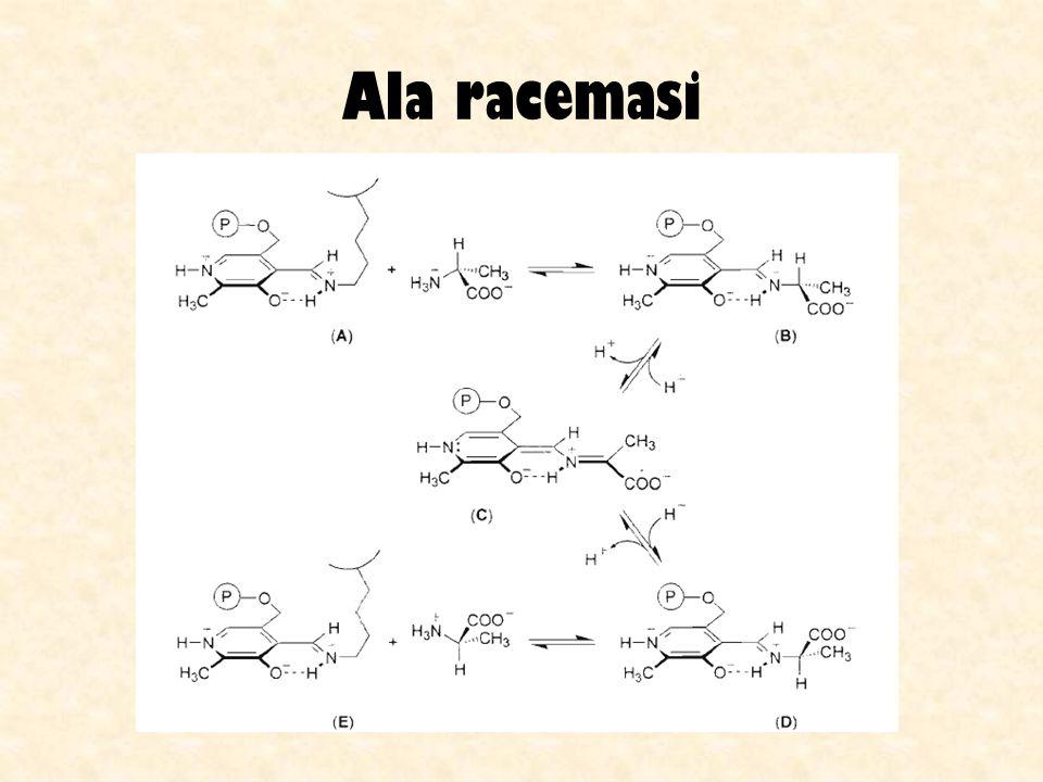 Ala racemasi