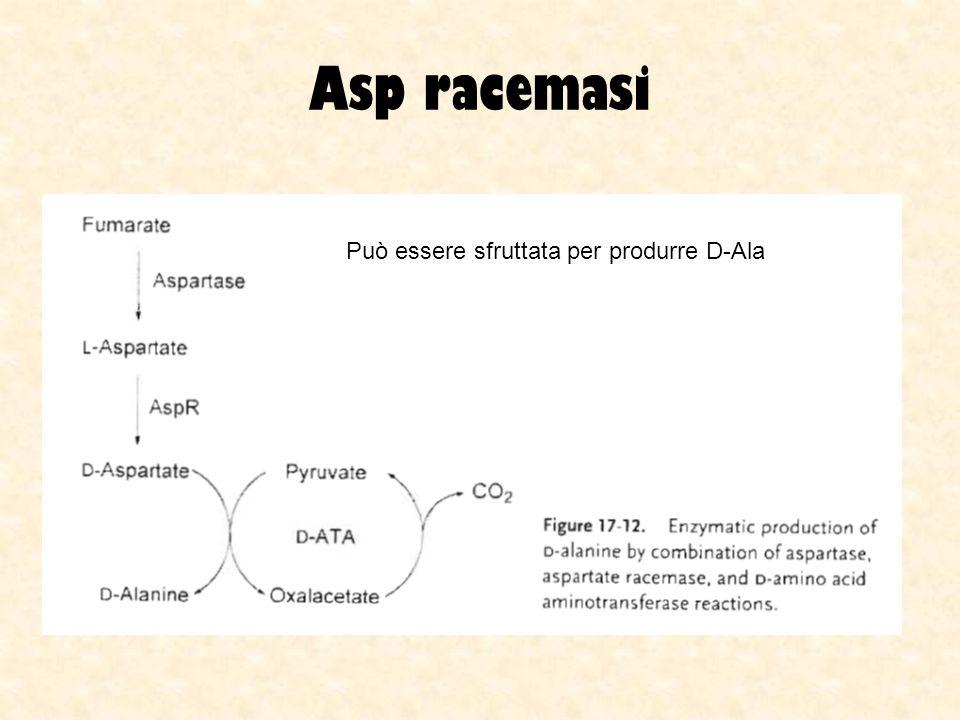 Asp racemasi Può essere sfruttata per produrre D-Ala