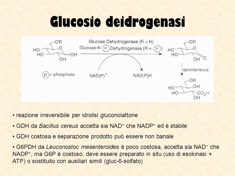 Glucosio deidrogenasi