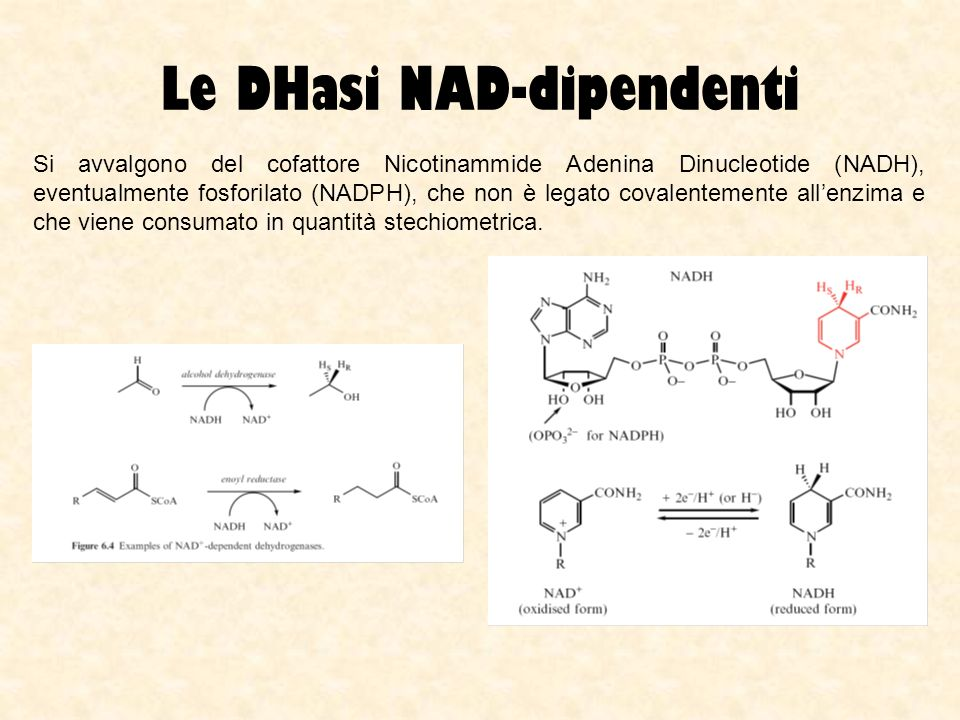 Le DHasi NAD-dipendenti