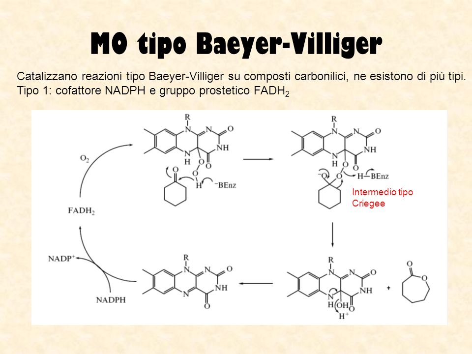 MO tipo Baeyer-Villiger