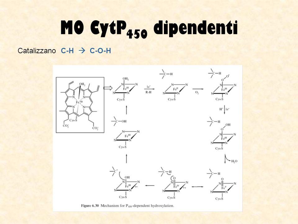 MO CytP450 dipendenti Catalizzano C-H  C-O-H
