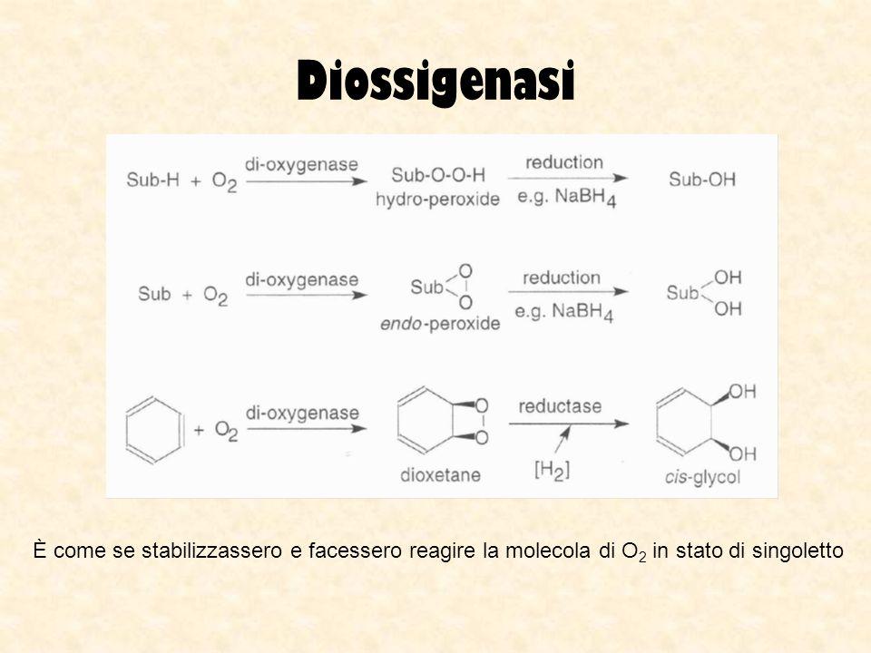 Diossigenasi È come se stabilizzassero e facessero reagire la molecola di O2 in stato di singoletto