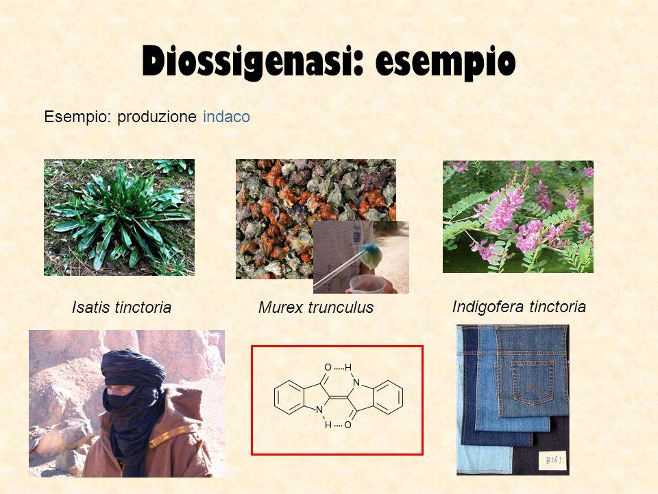 Diossigenasi: esempio