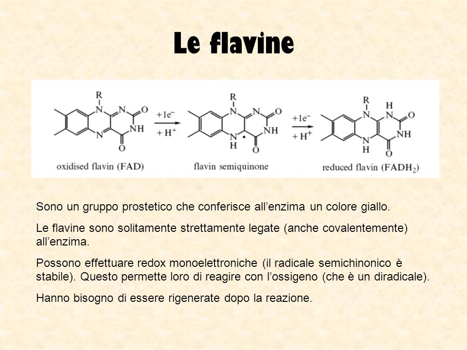 Le flavine Sono un gruppo prostetico che conferisce all'enzima un colore giallo.