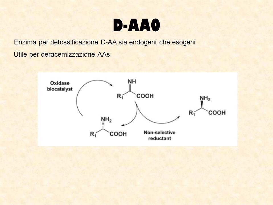 D-AAO Enzima per detossificazione D-AA sia endogeni che esogeni