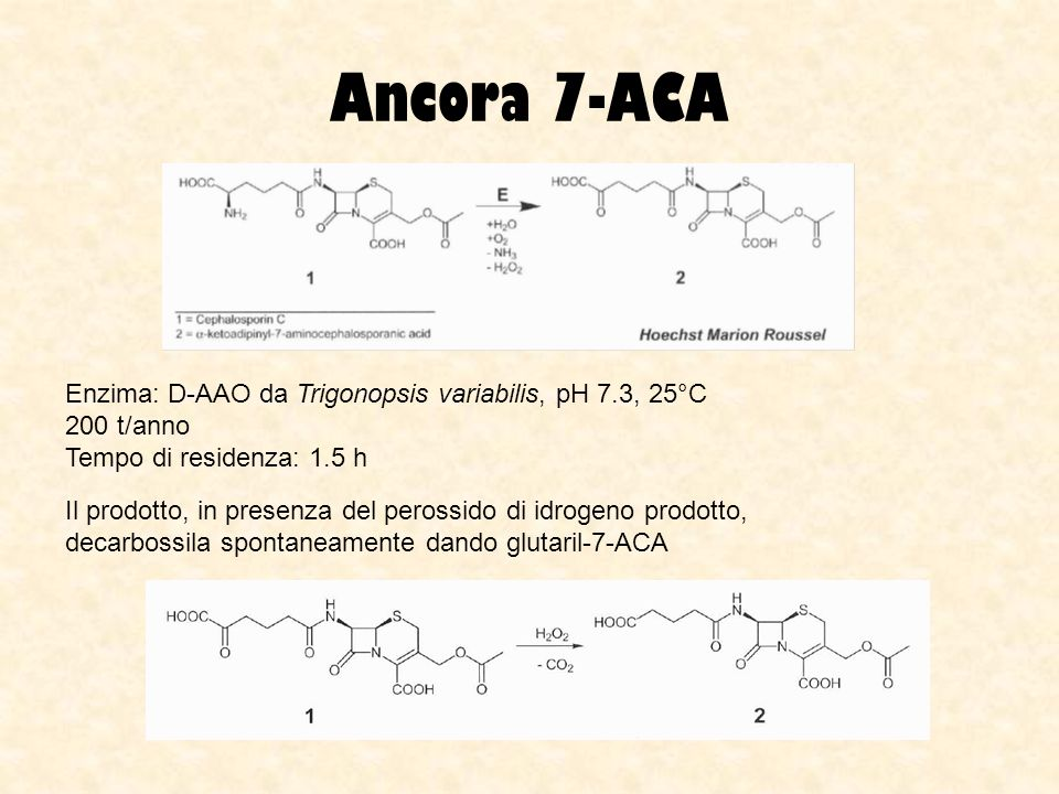 Ancora 7-ACA Enzima: D-AAO da Trigonopsis variabilis, pH 7.3, 25°C