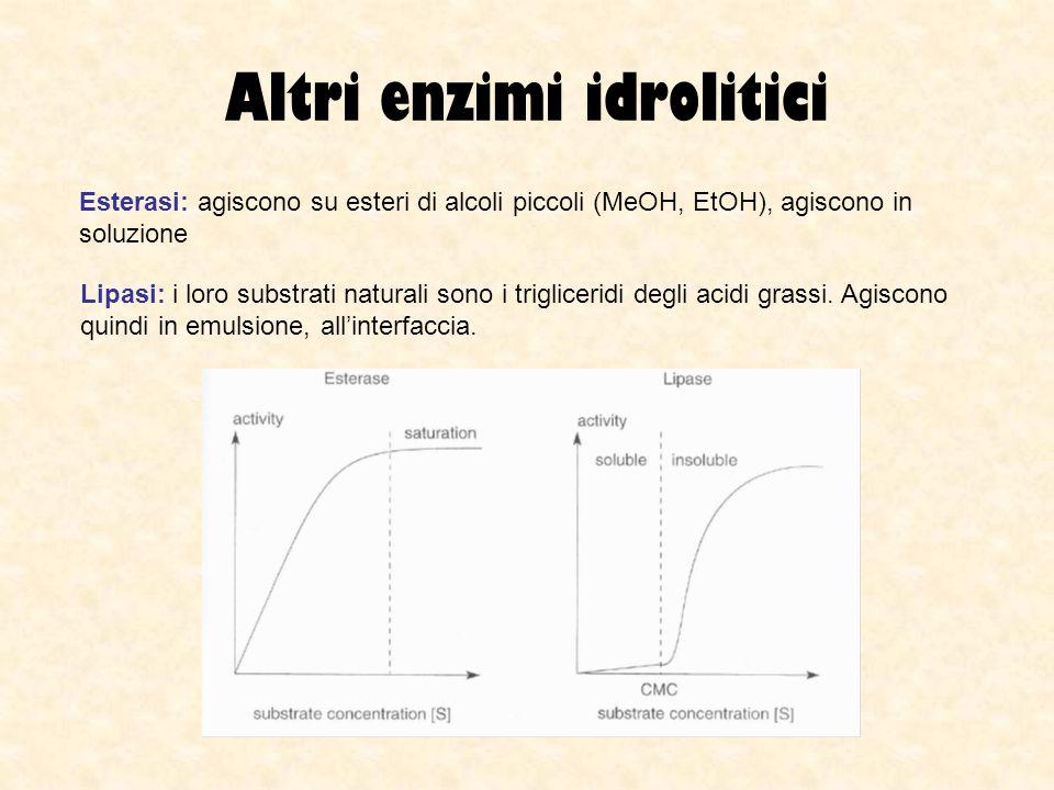 Altri enzimi idrolitici