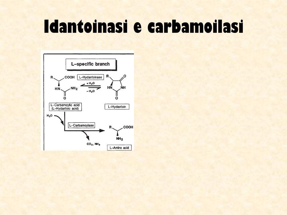Idantoinasi e carbamoilasi