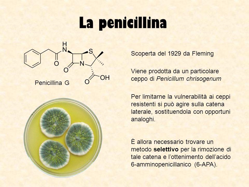 La penicillina Scoperta del 1929 da Fleming