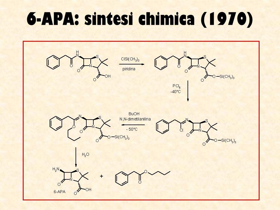6-APA: sintesi chimica (1970)