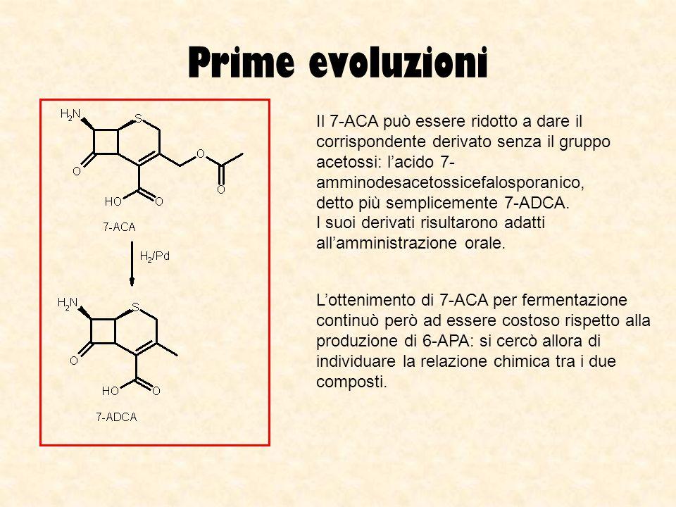 Prime evoluzioni