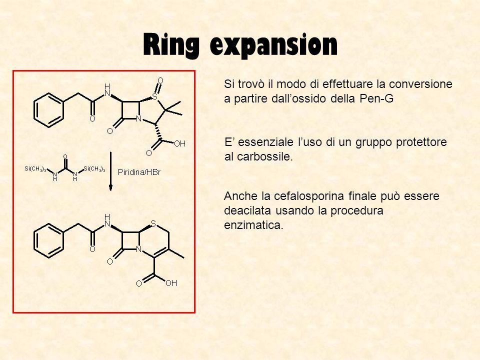 Ring expansionSi trovò il modo di effettuare la conversione a partire dall'ossido della Pen-G.