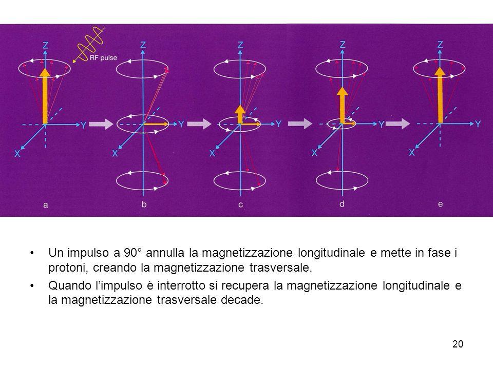 Un impulso a 90° annulla la magnetizzazione longitudinale e mette in fase i protoni, creando la magnetizzazione trasversale.