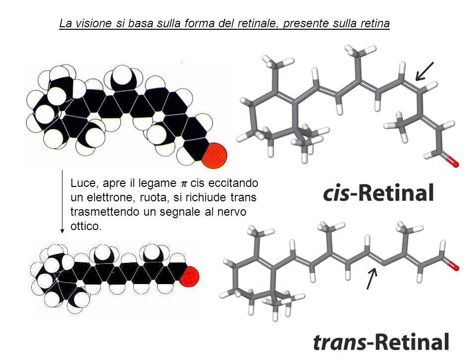 La visione si basa sulla forma del retinale, presente sulla retina
